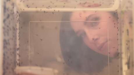 spence beaulieu looks through an enclosure of mosquitoes